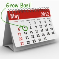 This is YOUR Date! Know When You Can Start Growing Basil Outdoors