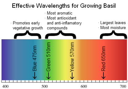 Growing Basil Light Spectrum Design